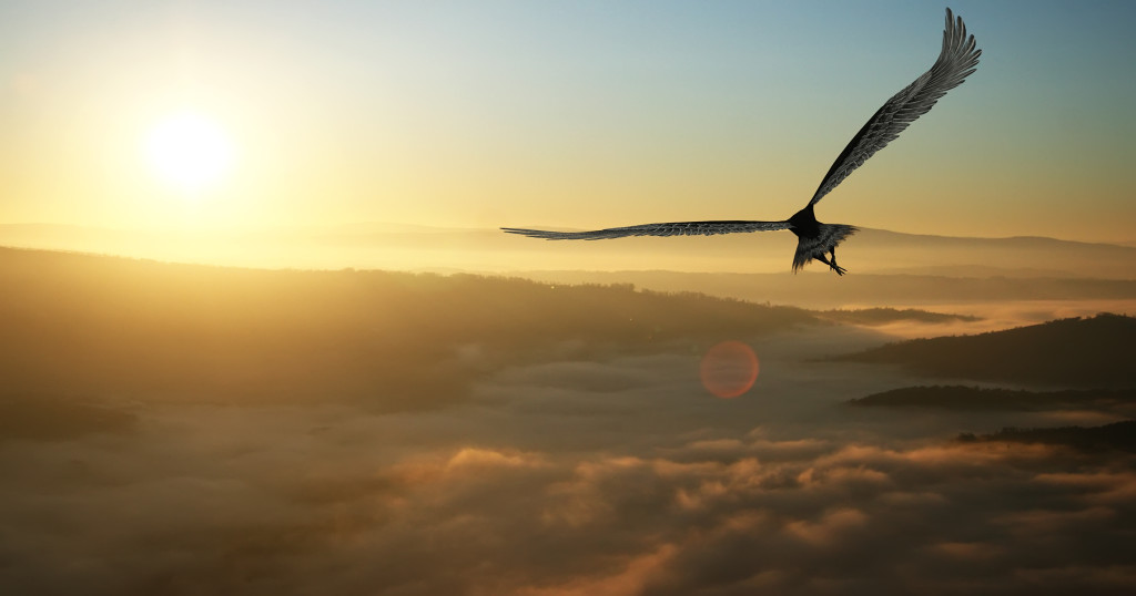 Eagle flying high res